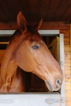 Dancing-Horse-314428