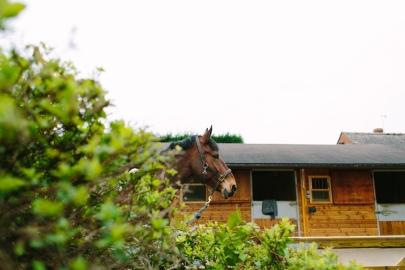 Dancing-Horse-314604