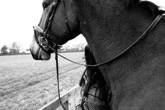 Dancing-Horse-314644