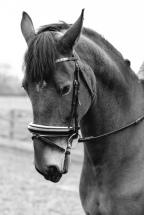 Dancing-Horse-325709