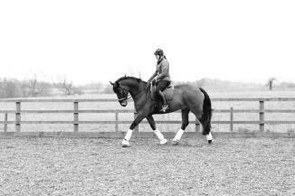 Dancing-Horse-325728