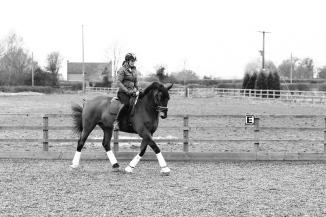 Dancing-Horse-325888