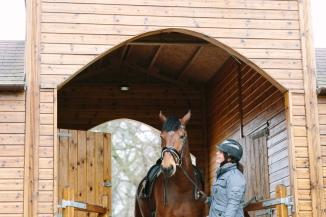 Dancing-Horse-325928